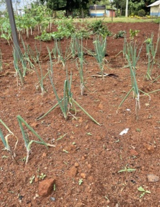 Neues aus Uhola_September21 (4)